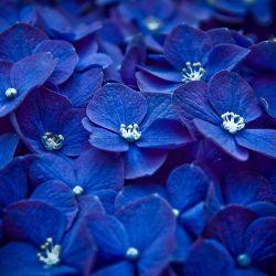 Цветотерапия — синий