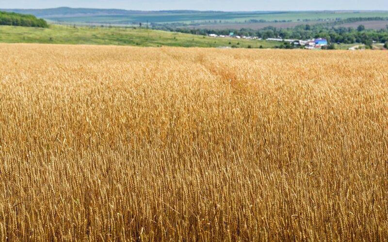 Замечания о земледелии в рамках космоэтики